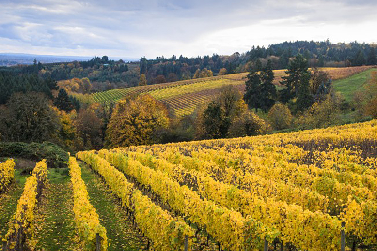 NR_WineCountry_OregonWineCountry_130493222_shutterstock_RobertCrum-652x521