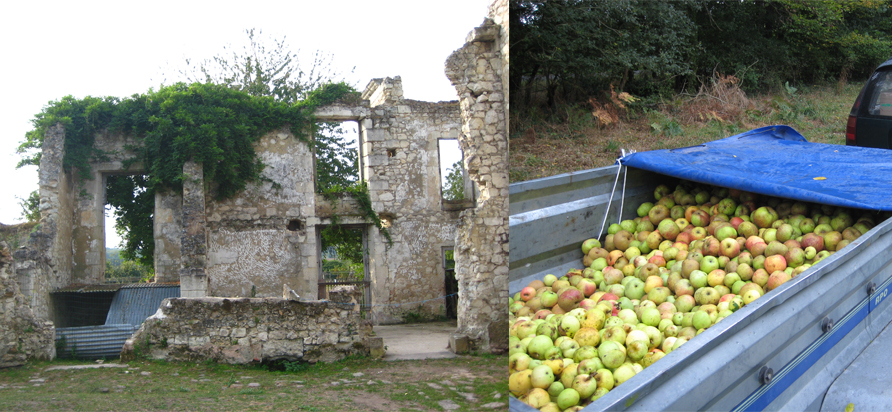 Left: Castle ruins on the farm. Right: On our way to make apple juice