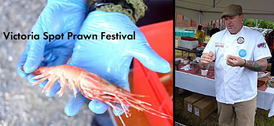 Spot Prawn Festival Slider