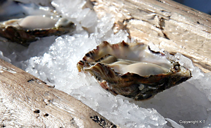 Hollie Wood Oysters