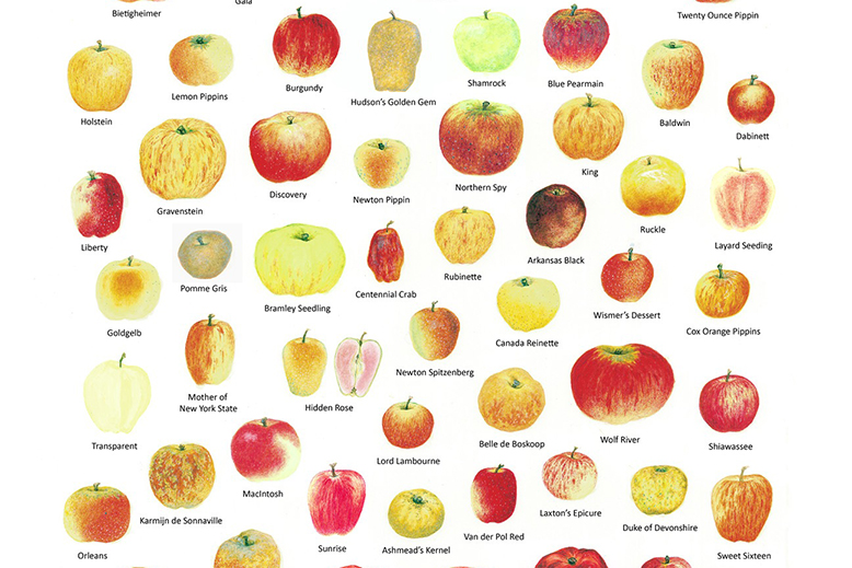 Apple-poster-varieties