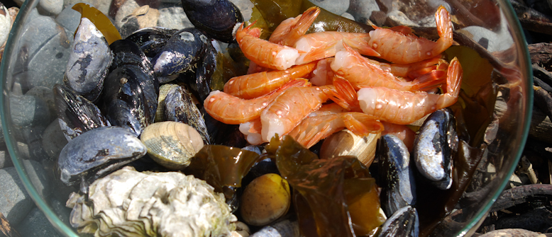 Fresh caught mussels, clams, spot prawns and oyster