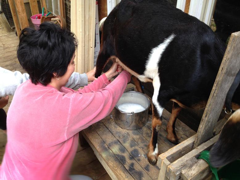 Sherri Martin milking a goat