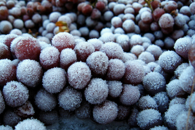 winter grapes