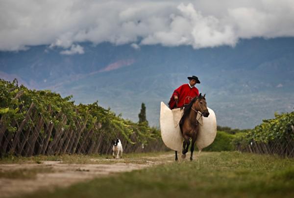 Gaucho between Vineyards