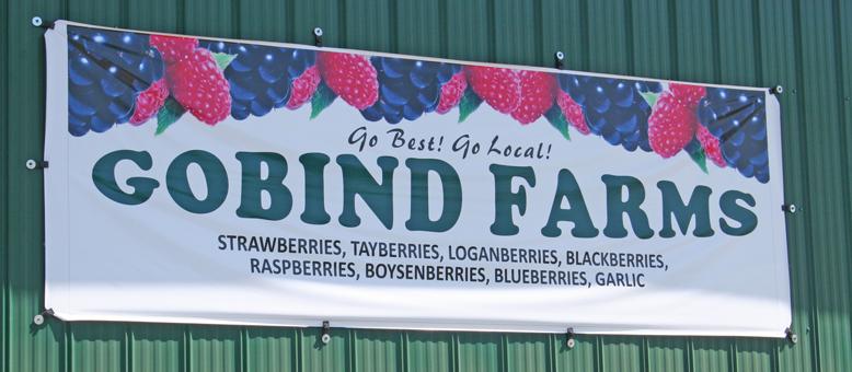 gobind-farm---go-best-go-local