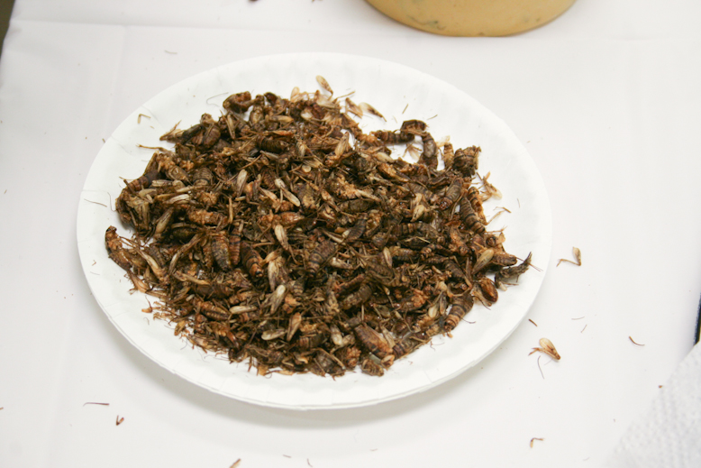 pestival - cricket plate