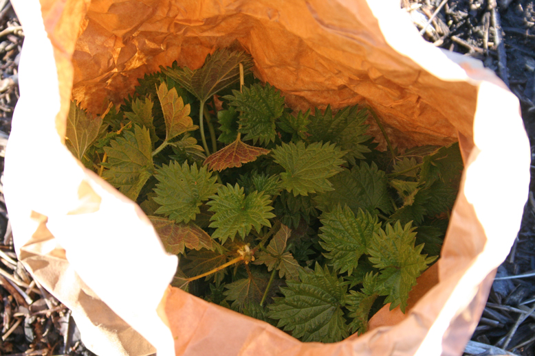spanakopita---nettles-in-the-bag