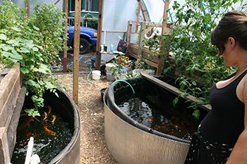 Mason Street aquaponics