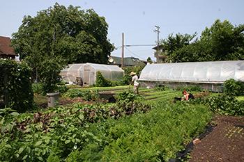 Mason Street Farm
